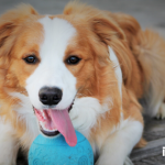 wpid-Keep_Dogs_Active_Header.png